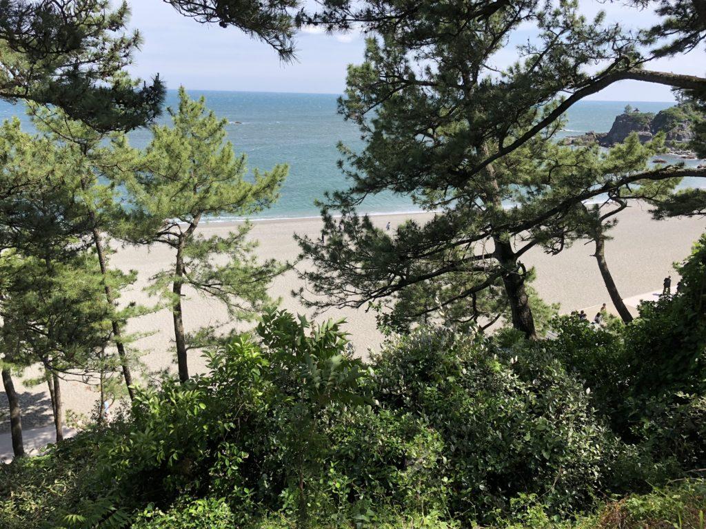 桂浜の松林